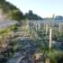 Nuovi dossier sulla gestione dei corsi d'acqua, le best practices secondo Woodland Trust e WWF
