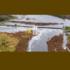 Dam Removal Europe: un nuovo, ambizioso progetto in Estonia