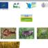 "Convegno finale Progetto Life ""SOS Tuscan Wetlands"" – 19 febbraio 2019 (Fucecchio)"
