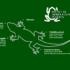 Comunicato STAMPA – I lavori di risistemazione non danneggino la salamandra di Aurora