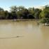 """La Stampa – Pulire i fiumi più spesso? Non serve – Piuttosto alberi per """"curare"""" l'ambiente"""