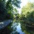 Gestione della vegetazione ripariale nei corsi d'acqua naturali e canali di bonifica – Corso a Firenze (nuova scadenza 28 febbraio)