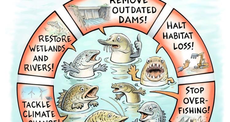 migrazioni dei pesci