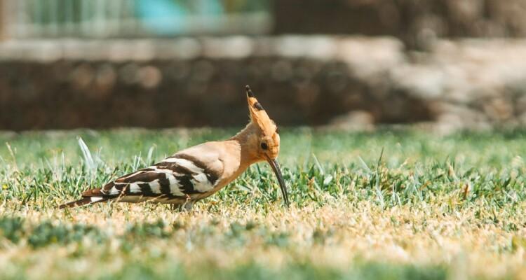 Piano nazionale per il Recovery Fund: biodiversità assente